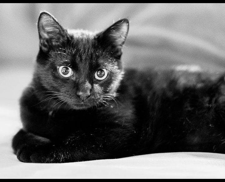 Noir c'est noir ...